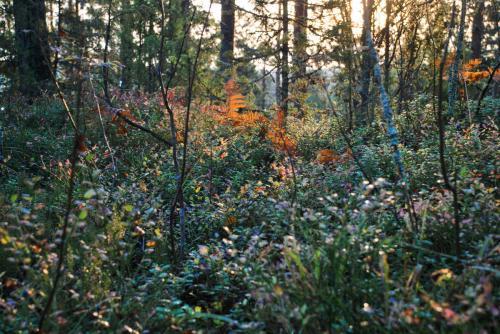 Piękno lasu Sawonii